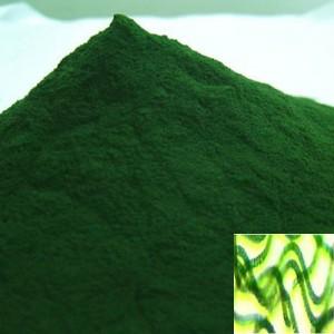 La spiruline Biologique un antioxydant naturel puissant