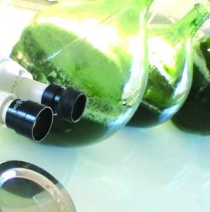 Elle permet aussi de recycler un autre antioxydant important : la vitamine C.